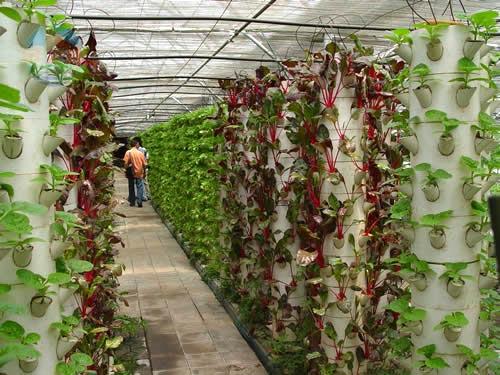 集发农业示范观光园,坐落在风景秀丽的旅游避暑胜地-秦皇岛市北戴河